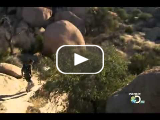 Man vs wild Bear Grylls Arizona Sky Islands part 1 of 4